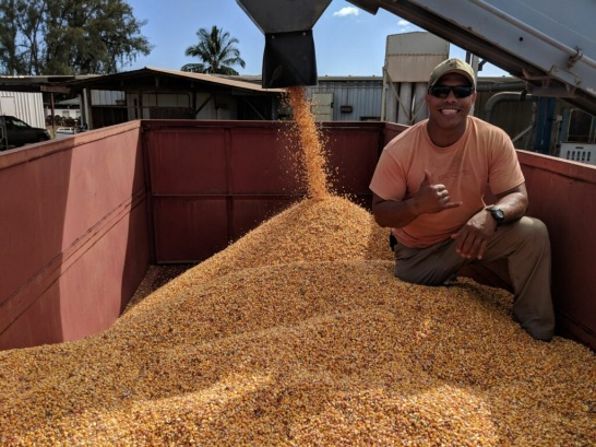 Jay Lagazo unloading our corn into the dryers at Beck's Hybrid.